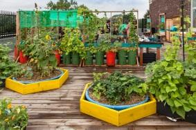 Roof Inspiration - Garden